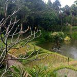 Four Seasons, Chiang Mai